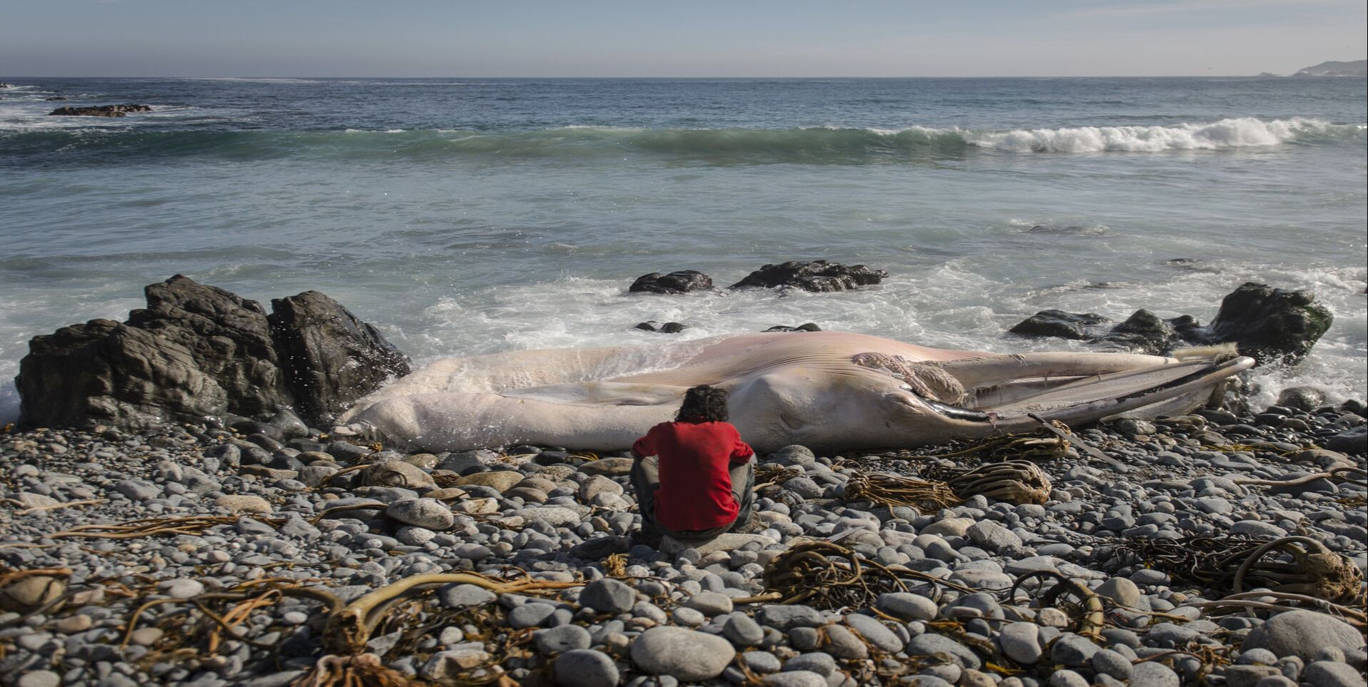 A man and a dead whale in a solitary beach in the documentary The Other One