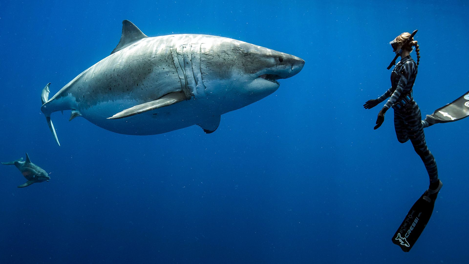 A woman diver swims with a white shark