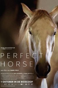 Perfect Horse