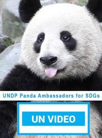 UNDP Panda Ambassadors for SDGs