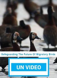 Safeguarding The Future Of Migratory Birds